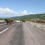 kein seltener Anblick in der Türkei