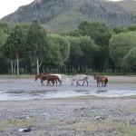 Pferde im Nationalpark