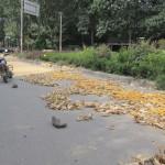 Maistrocknung am Straßenrand