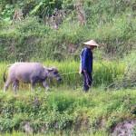 Bauer mit Wasserbüffel