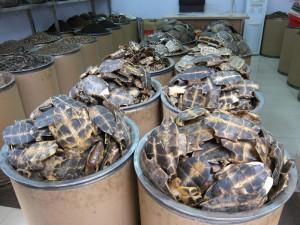 Schildkrötenpanzer