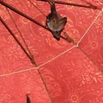 Fledermäuse im Tempel