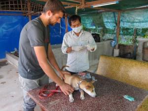 beim Tierarzt in Siem Reap