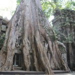 Ta Phrom- Angkor